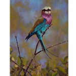 High Roller - Lilac Breasted Roller by John Banovich