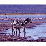 Jewel of the Crater - Zebras and flamingos by John Banovich
