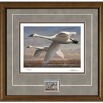2016- 2017 Federal Duck Print COLLECTOR'S EDITION REGULAR - Trumpeter Swans by Joe Hautman
