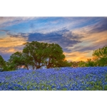 Bluebonnets Under Evening Sky 2 by Rob Greebon