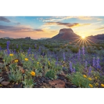 Big Bend Bluebonnet Sunrise by Rob Greebon