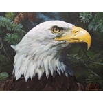 Fir and Feathers - Portrait of Bald Eagle by wildlife artist Carl Brenders