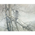 Ghost of the North - Great Gray Owl by Robert Bateman