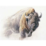 Bison Study by Robert Bateman