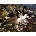 The Survivors - Canada Geese by wildlife artist Carl Brenders