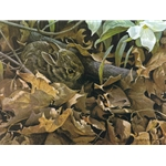 Among the Leaves - Cottontail by Robert Bateman