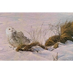 Afternoon Glow - Snowy Owl by Robert Bateman