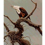 African Fish Eagle by Robert Bateman