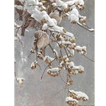 House Sparrows and Bittersweet by Robert Bateman