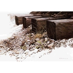 By the Tracks - Killdeer by Robert Bateman