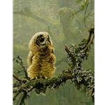 Continuing Generations - Spotted Owls by Robert Bateman
