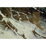 Cougar in the Snow by Robert Bateman