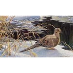 Down for a Drink - Mourning Dove by Robert Bateman
