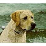 Of the Finest Breed: Yellow Labrador by John Weiss