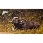 A Resting Place Cape Buffalo by Robert Bateman