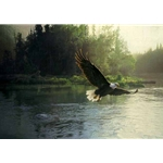 Forever Free - Bald Eagle by Daniel Smith