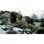 Mountain Echoes -Bison by wildlife artist Rod Frederick