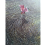 As the Tide Turns - Roseate Spoonbill by wildlife artist Matthew Hillier