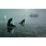 In Their Presence - Orcas by artist John Seerey-Lester