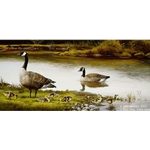 The Family Canada Geese by wildlife artist Maynard Reece