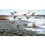 Icy Water Mallards by wildlife artist Maynard Reece