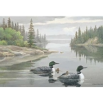The Family - Loons by wildlife artist Maynard Reece