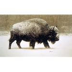 Buffalo in Storm (Bison) by James Bama