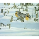 After the Blizzard - Western Meadowlarks by wildlife artist Lars Jonsson