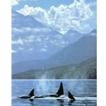 Inside Passage - Orcas by wildlife artist Ron Parker