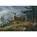 Autumn Whitetails buck and does by wildlife artist Jim Hautman