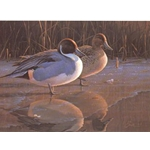 Icy Reflections - Pintails 1991 NFWF stamp print by Daniel Smith