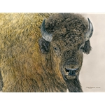 Slow Bull - American bison by camouflage artist Judy Larson