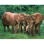 The Creche - elephant family in Aberdare National Park, Kenya by African wildlife artist Guy Combes
