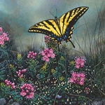 Wildflower Suite - Swallowtail Butterfly & Pink Mountain Heather by Stephen Lyman