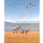 High Hopes - Rothschild giraffe by African wildlife artist Guy Combes