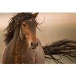 Mateo - portrait of a wild brown stallion by photographer Kimerlee Curyl