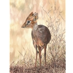 Dik-Dik - portrait by African wildlife artist Guy Combes
