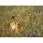 Lion Cub and Butterfly by African wildlife artist Simon Combes