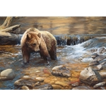 Fish Tales - grizzly bear fishing for sockeye salmon by wildlife artist Bonnie Marris