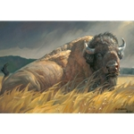 Big Boss - Bison resting on grassy prairie by wildlife artist Nancy Glazier