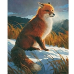 Rimlit Red - portrait of red fox by artist Nancy Glazier