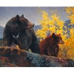 The Cinnamon Bear by wildlife artist Nancy Glazier