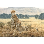 ~ Cheetah Pair by artist Simon Combes
