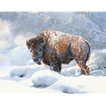 ~ Early Blizzard - Bison in snow by Bonnie Marris
