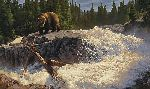 The Cascades - Grizzly bear at waterfall by wildlife artist Greg Beecham