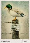 The Federal Duck Stump - Mallard Drake by humorist artist Will Bullas