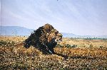 Facing the Wind - Lion resting by african wildlife artist Simon Combes