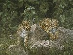 Leopard Cubs by African wildlife artist Simon Combes