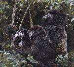 Mountain Gorillas by wildlife artist Simon Combes