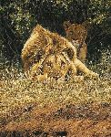 The Hypnotist - Lions by african wildlife artist Simon Combes